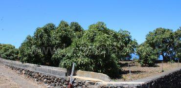 La Punta de Tijarafe