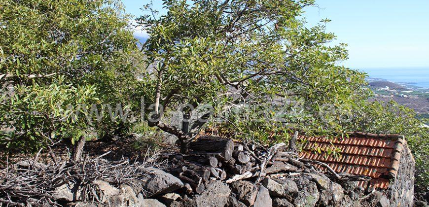Bodega en Tijarafe