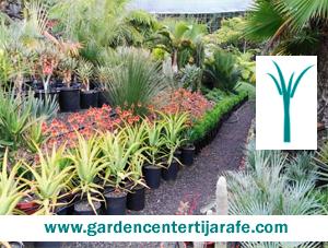 garden_center_tijarafe__la_palma