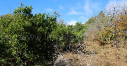 Finca en Puntagorda